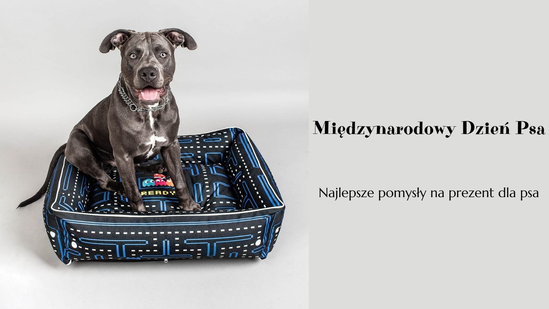 Międzynarodowy Dzień Psa, czyli najlepsze pomysły na prezent dla psa